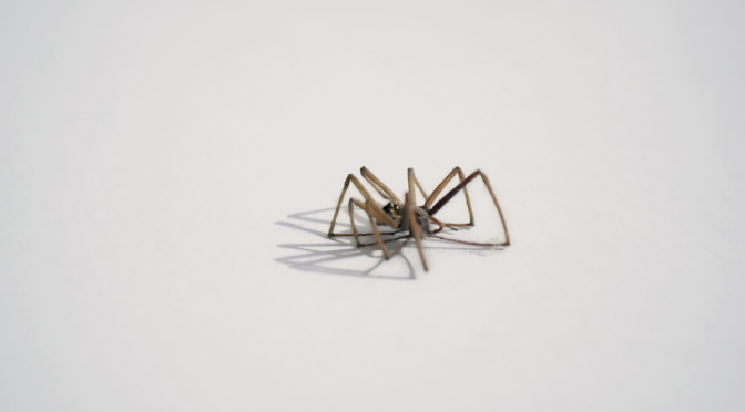 A dried up spider on a white background. Free HD video footage