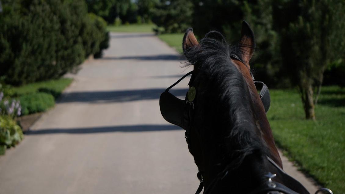 harnessed-jogging-dark-bay-horse-free-hd-video-footage