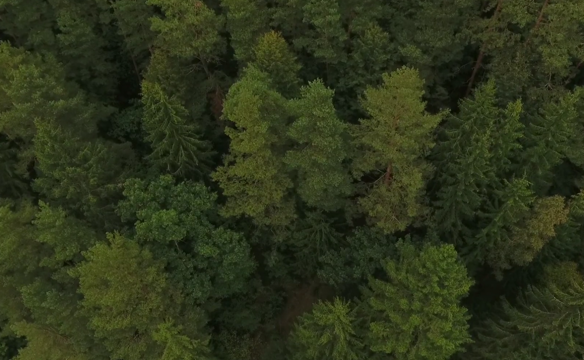 Free drone stock footage: nature, forest